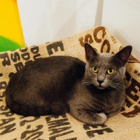 inside the us's First Cat Café