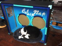 As SXSW Beckons, Cat Café Ambitions Are finally Realized