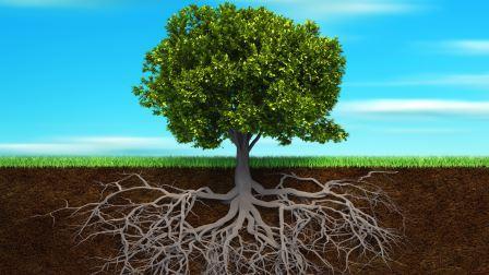 Tree_ss_1920