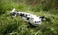 Salamander robot can walk, crawl and swim like the real deal