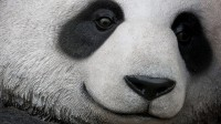 Assessing the Penguin and Panda Updates: How should your Digital advertising and marketing strategy alternate?
