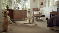 Ingenious Stunt methods real Pets With tv Pets
