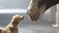"prime 10 Most Shared tremendous Bowl commercials Of All Time: Budweiser's ""puppy Love"" most effective 2014 Video ad To Make The checklist"