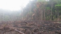 ranking the five hundred firms And buyers that would stop Deforestation–however do not