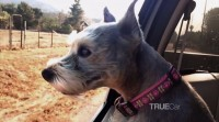 TrueCar To Donate $1 For Every Instagram Photo Tagged #DogsInCars
