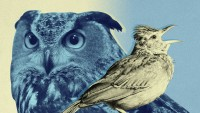Morning people Vs. night time Owls: 9 Insights Backed via Science