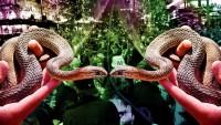 Revenge of the Snake people