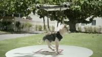 Humane Society's brilliant pet Drone Stunt Achieves Viral Success