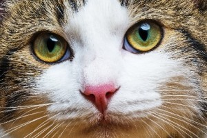 U.S. Giving Roars back…but for One Sector It's more Like a Meow