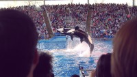 """""""brand Challenges"""" Are Impacting SeaWorld's base line"""
