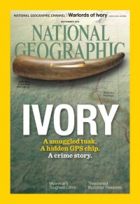 How Ingenious pretend Elephant Tusks Helped observe The illegal Ivory change