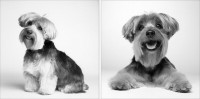 These Pictures Of Dogs Taken Over a 12-Year Span Will Make You Hug a Dog