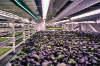 This London Underground Farm Grows Salad In A WWII Bomb safe haven