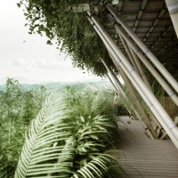 These Cities Of the longer term could be constructed entirely Of Bamboo