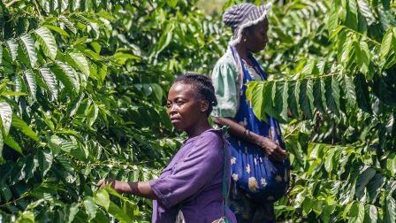 Are women the key To fixing climate exchange?