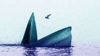 Ahoy! Whaling Is the brand new Phishing: Is Your Boss really Your Boss?