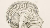 Meet Viv, The 'large brain' From The Creator Of Siri