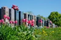 Deathtech Rising: Mylestoned Unveils Interactive Memorial software