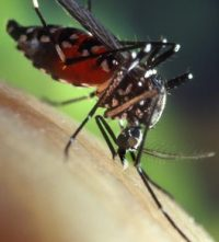 The Yellow Fever Outbreak: What You Should Know