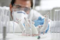 Genetically modified mice could sniff out harmful chemicals