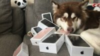 Billionaire Son's Dog Gets Its Fair Share of Eight iPhone 7 Phones