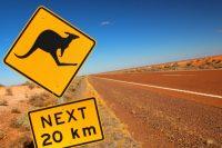 Hypercat standard becomes Australian IoT cat's meow