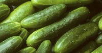 Of course machine learning can help you sort cucumbers