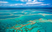 Climate change could bleach most coral reefs within the century