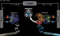 Researchers discover a better way to make ammonia
