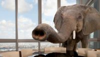 AI: The Elephant In The Room