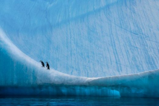 Capturing The Beauty Of Ice, Polar Bears, And Penguins' Before They Are Gone Forever