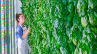 Has This Silicon Valley Startup Finally Nailed The Indoor Farming Model?