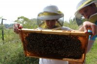 Bee Corp. Closes on Series A Funding for Hive-Monitoring Software
