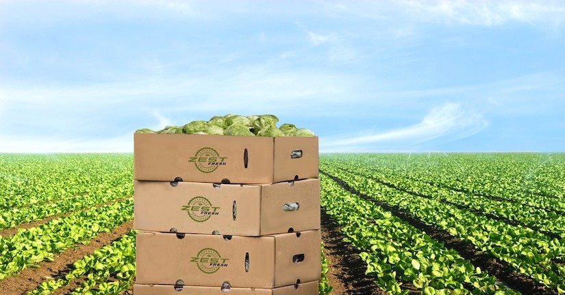 Zest labs brings IoT and blockchain to the fresh food supply chain | DeviceDaily.com