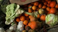 New York's Sanitation Bureau Is Searching For Food Waste Innovations