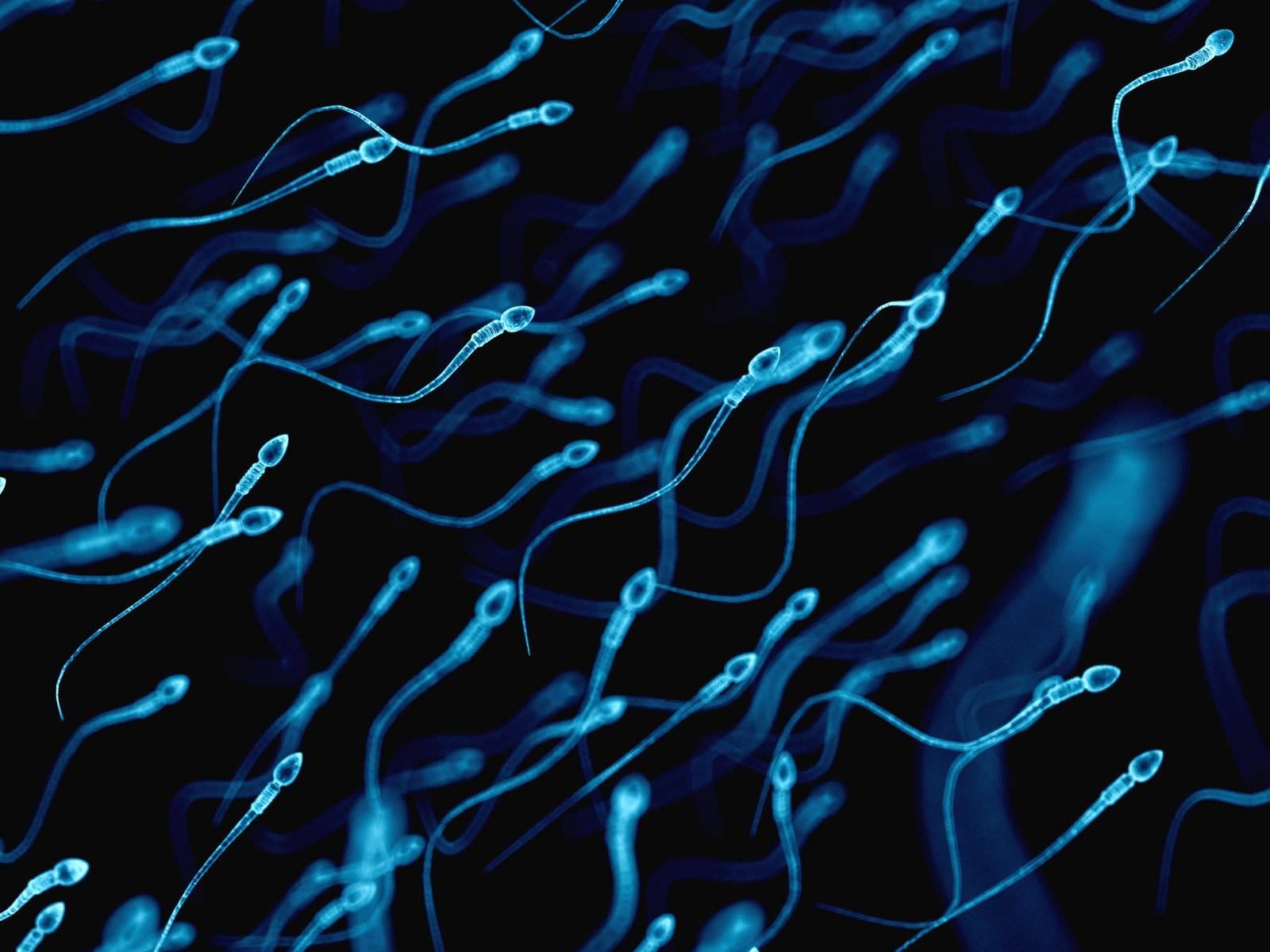 Researchers use sperm to deliver cancer drugs to tumors | DeviceDaily.com