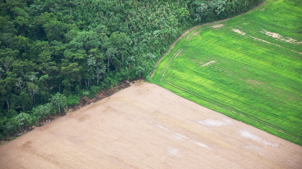 How Real Are Companies' Promises To Stop Deforestation? | DeviceDaily.com