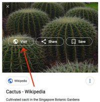 Google Search Removes 'View Image,' Sets Precedent