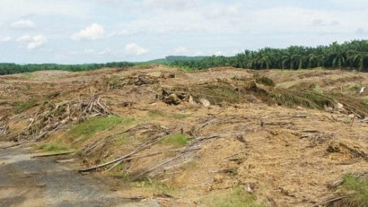 How Real Are Companies' Promises To Stop Deforestation?
