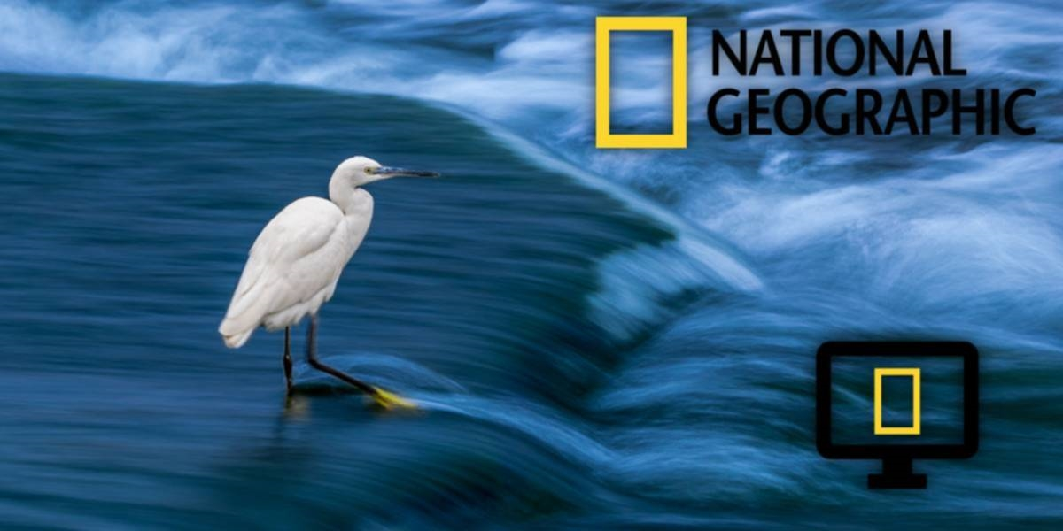 National Geographic, Sprint Launch Quest To Find Innovation In Wireless Tech | DeviceDaily.com