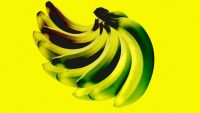 Bananas have died out once before–don't let it happen again