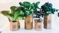 These low-tech indoor gardens bring vegetables to your kitchen