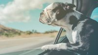 Waze teams up with Best Friends Animal Society to make pet adoption easier