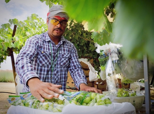 How a small worker-controlled farm collective could transform labor for decades | DeviceDaily.com