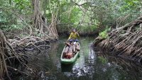 Apple is investing in a huge mangrove forest in Colombia