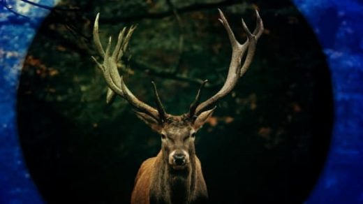 Busted on Bumble: Animal poacher lives to regret flirting with a game warden