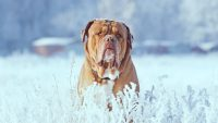 Polar vortex: Do these 7 things to protect your pets from cold weather