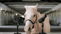Here's a horse doing ASMR so you'll be inspired to visit Lexington, Kentucky