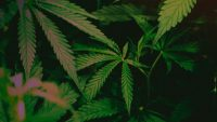 Why pot legalization just failed again in one of the U.S.'s most liberal states
