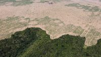 4 essential reads on Brazil's vanishing Amazon rainforest
